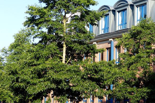 Ecole Européenne de Bruxelles 1 Uccle – Berkendael